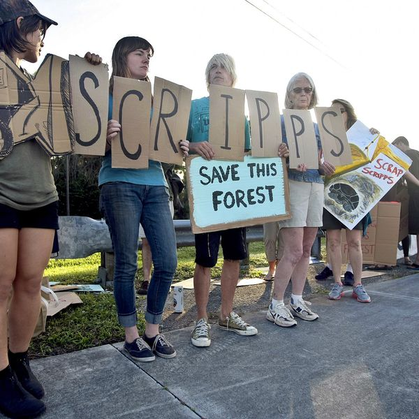 About 35 demonstrators, some belonging to the Everglades Earth First! and the Palm Beach County Environmental Coalition, gather peacefully along Donald Ross Road near Central Boulevard in Palm Beach Gardens to protest the development of the Briger forest on Dec. 5, 2014. (Photo by Bill Ingram)